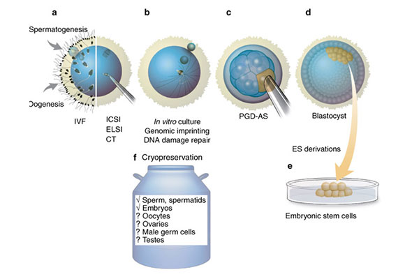 Embryo Cryopreservation